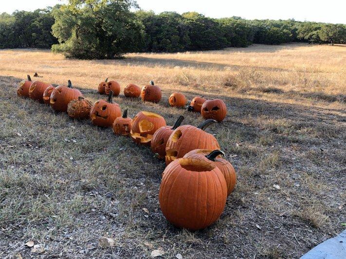 Pumpkin Hunt 2019